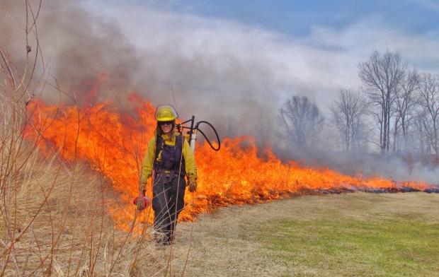 Parks - Fire