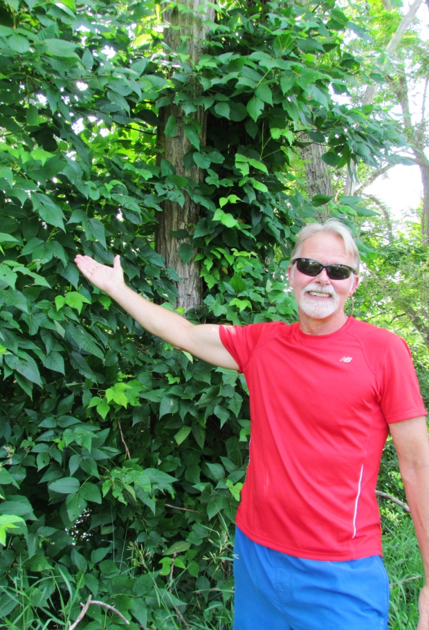 This poison ivy vine along the Shiawassee River towers more than 15 feet above the head of six foot tall Jim Lloyds, a  board member of the Six Rivers Land Conservancy  (www.sixriversrlc.org  ) and leader of their Adventure League.